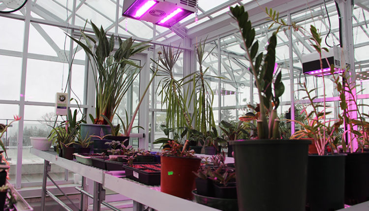 Greenhouse at Langara