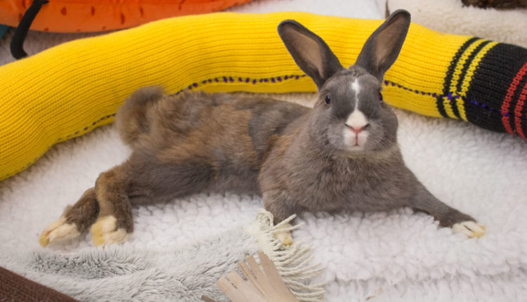 07_bunnyfest_rabbits_0163