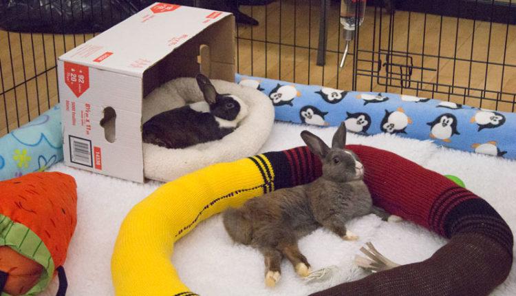 07_bunnyfest_rabbits_0176