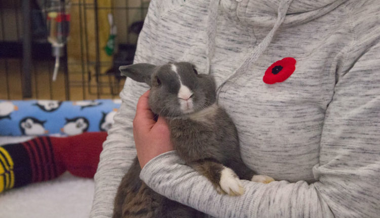 07_bunnyfest_rabbits_0183